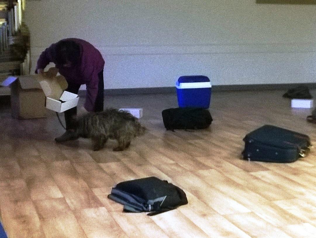 Oxfordshire Dog Training Course Uk